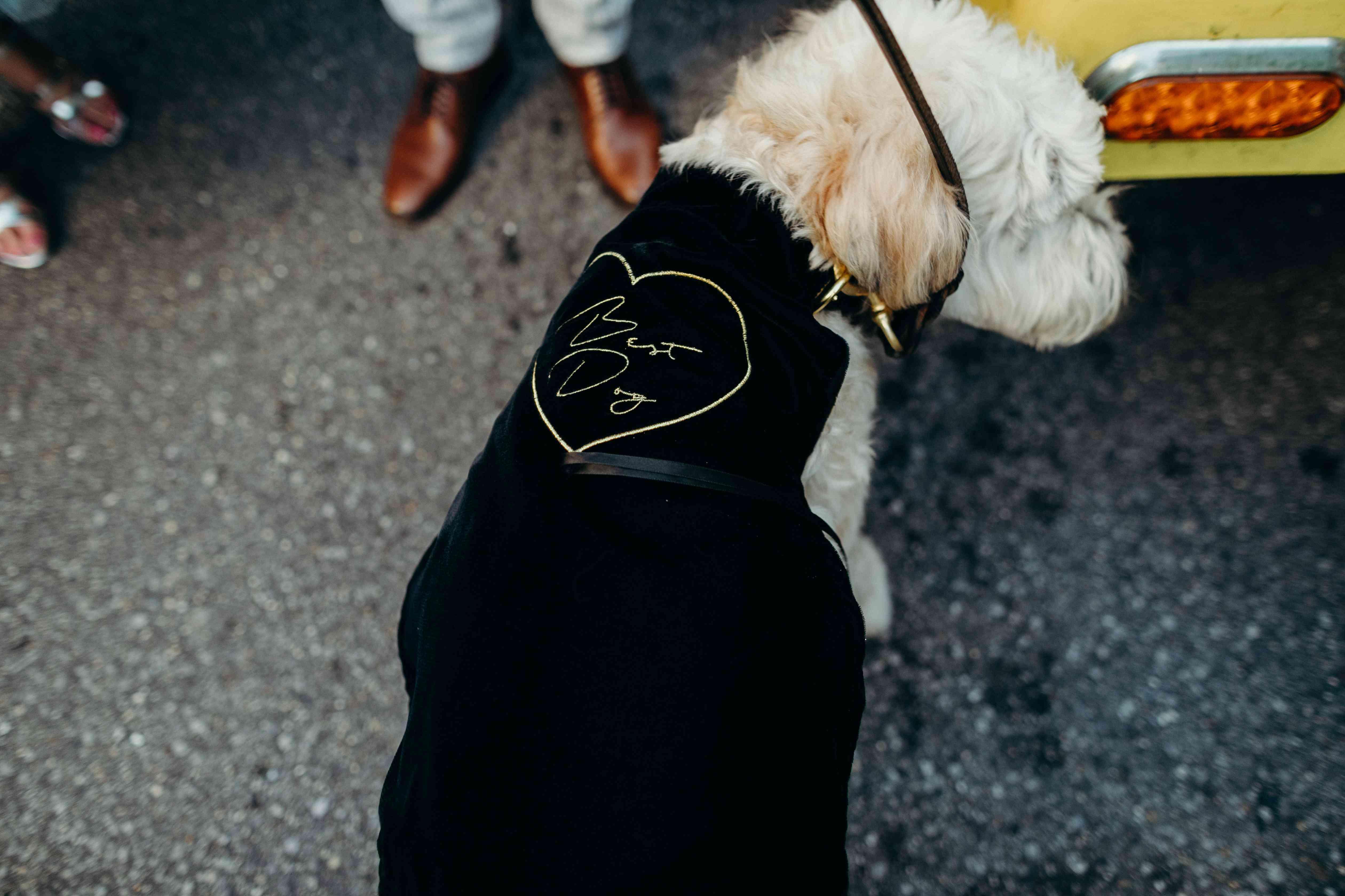 Dog wearing cape