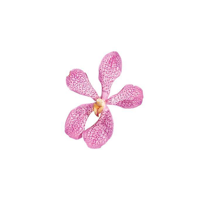 Pink mokara orchid