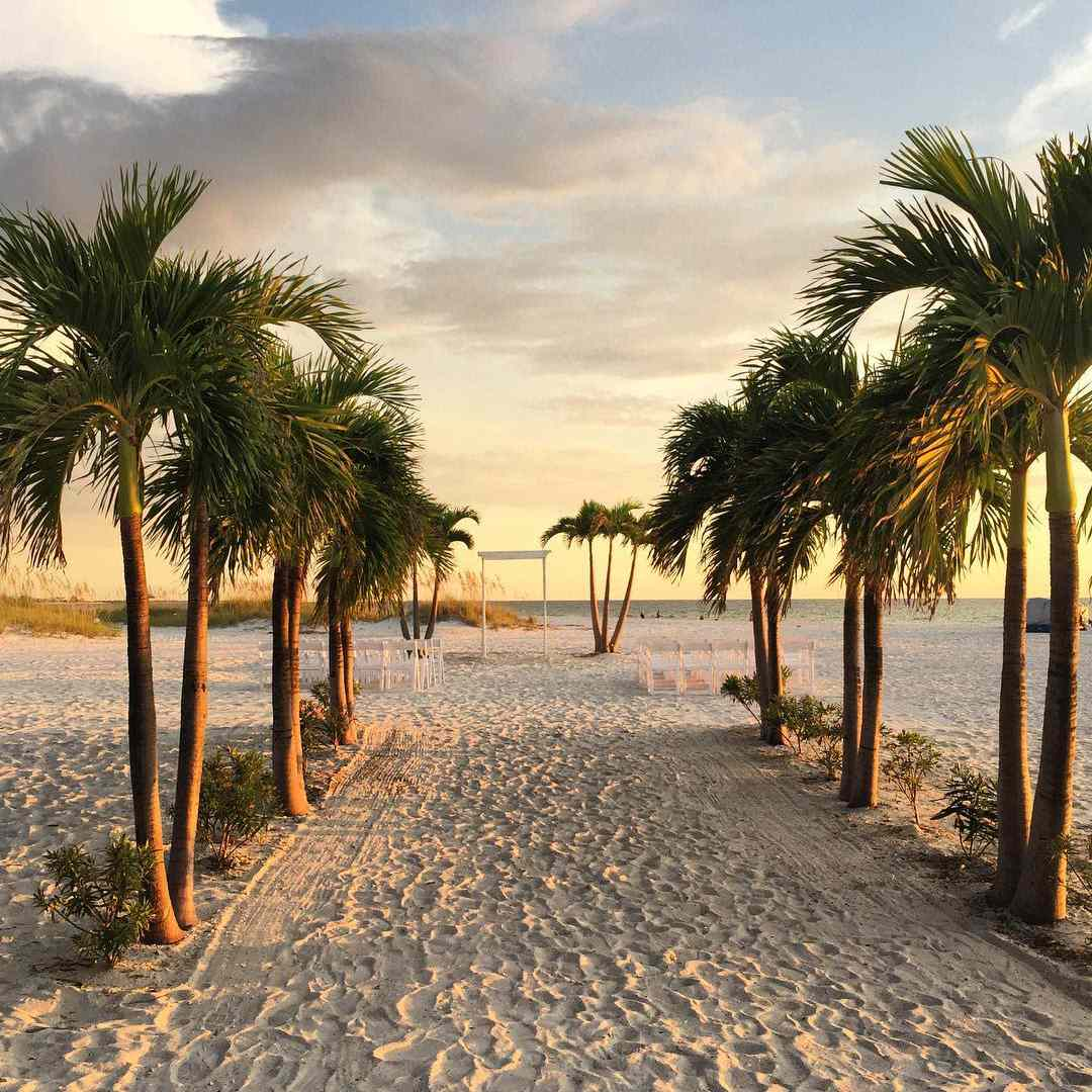 Sandy beach lined with palm trees.
