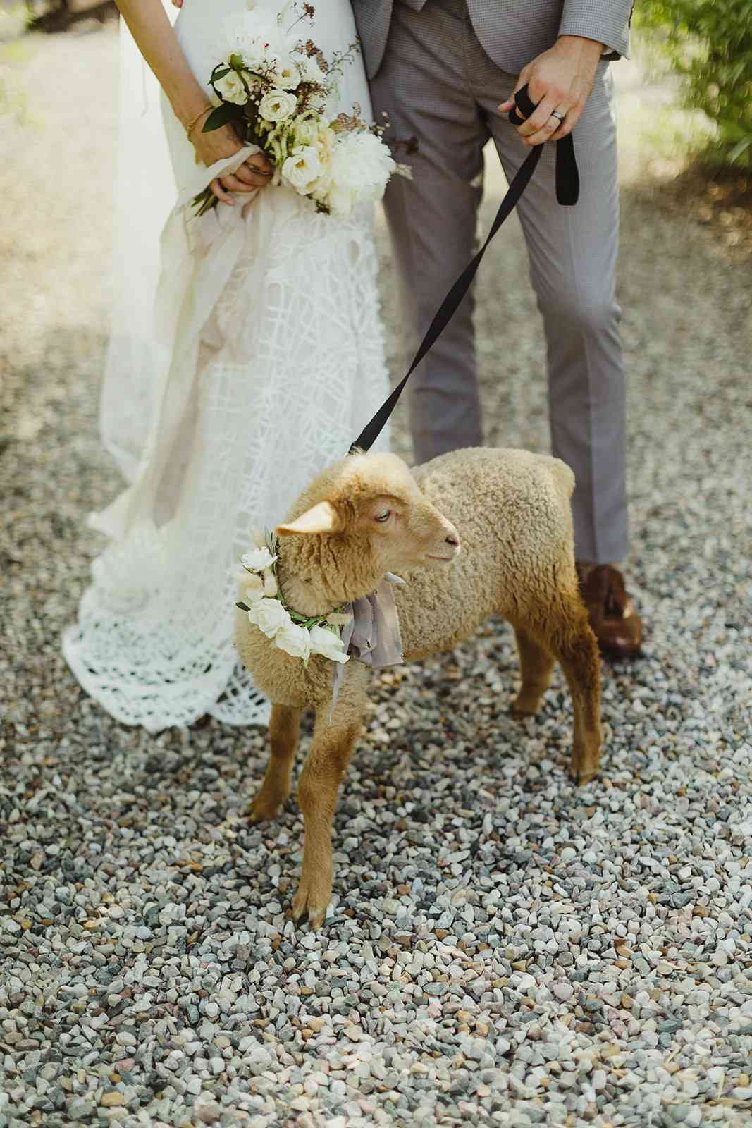 lamb in flower collar