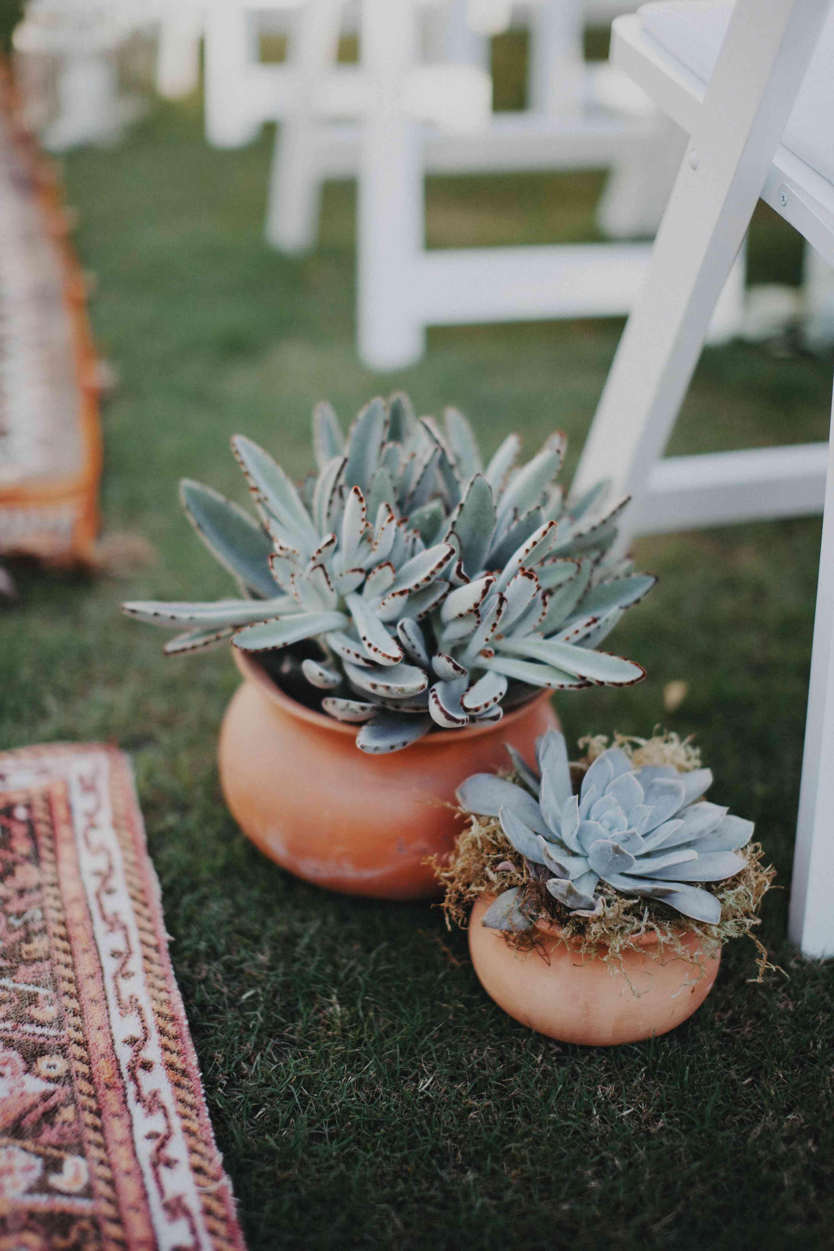 Potted Succulent Wedding Aisle Decor