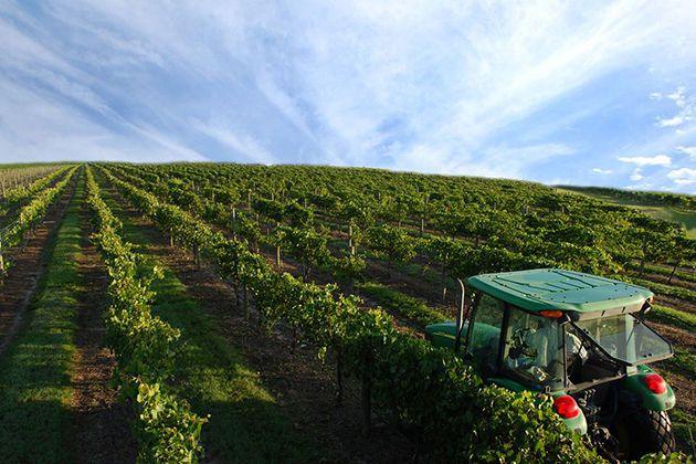 5 Unique South Florida Winery Wedding Venues
