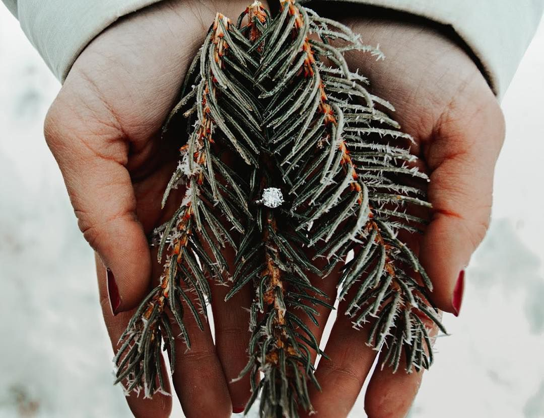 Engagement ring in the center of pine needles