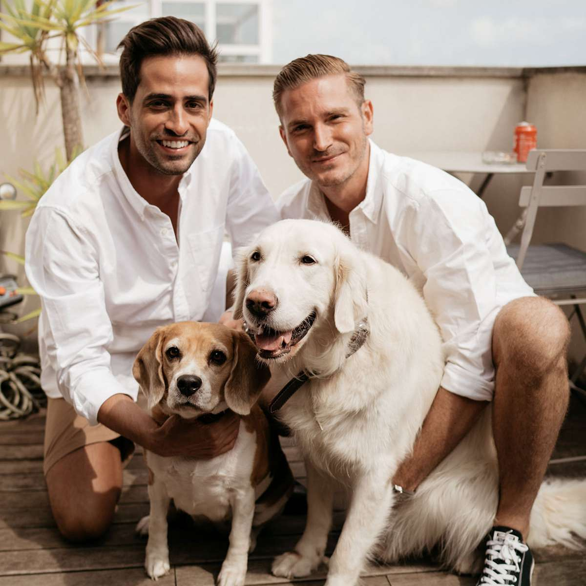 grooms and dogs