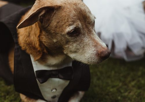 <p>Groom dog</p>