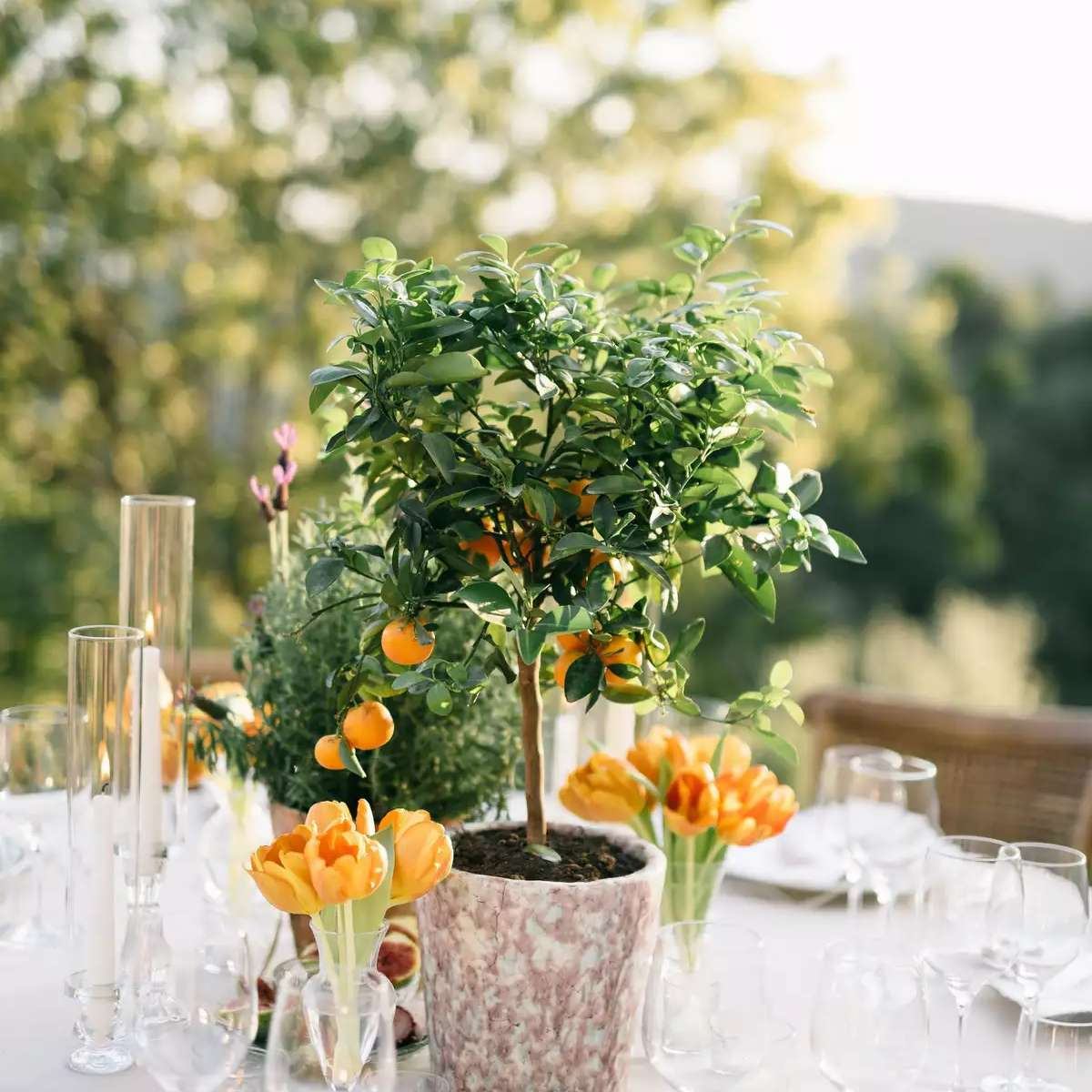 citrus tree centerpiece