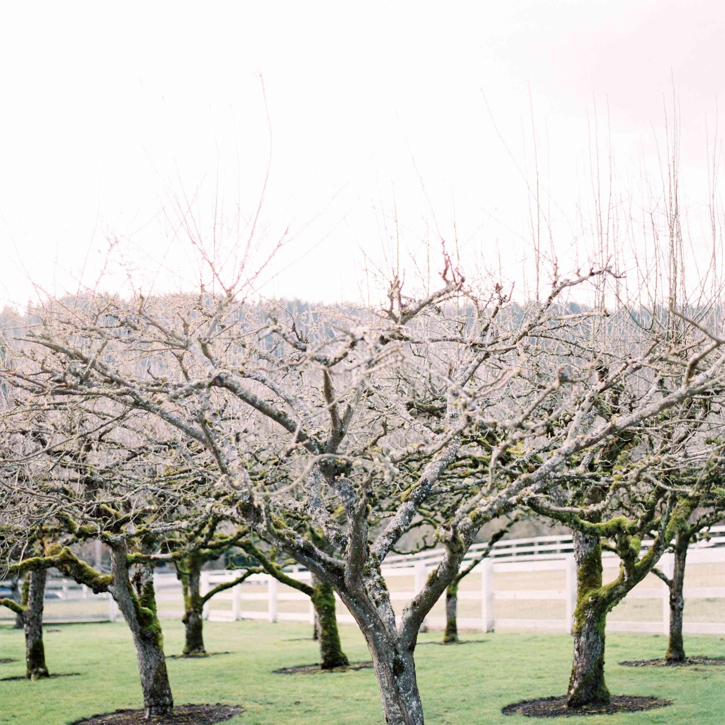 <p>Weathered trees amongst a lush landscape.</p>