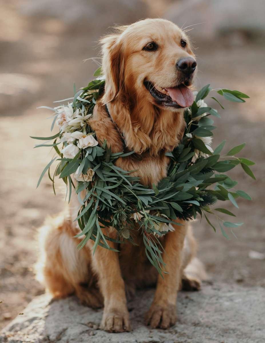 Golden retriever in floral wreath