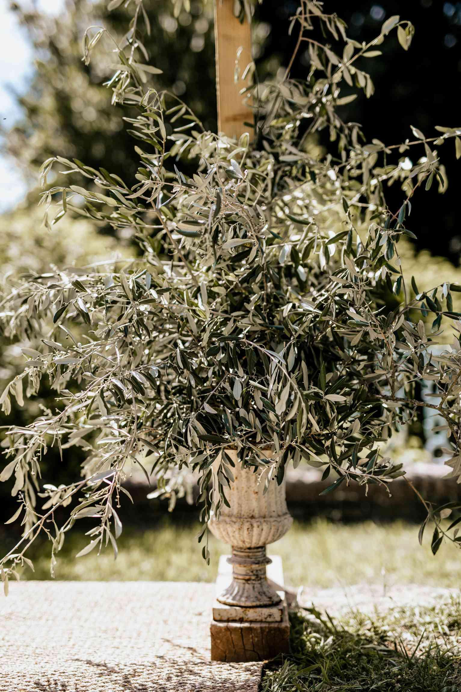 olive branch arrangement