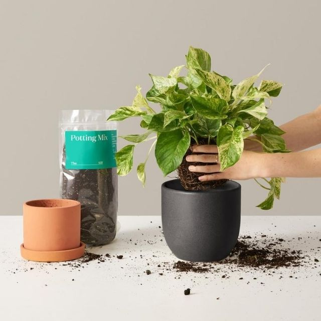 The Sill Plant Care Workshop