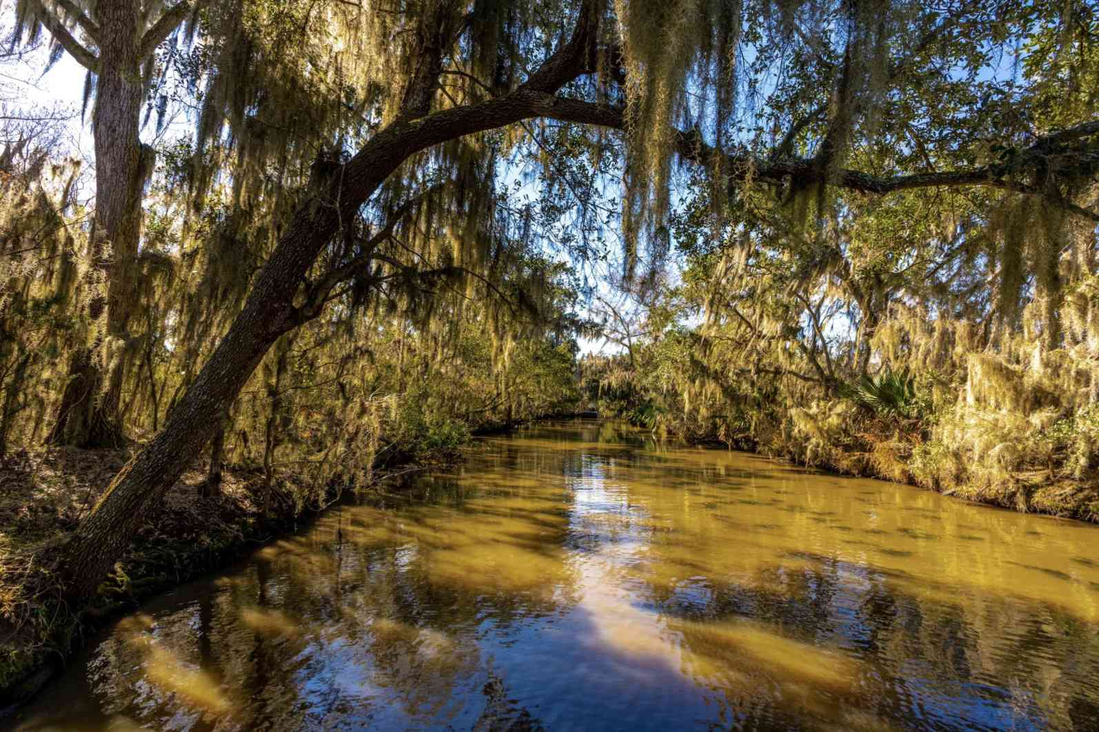 Oak trees over the swamp in New Orleans
