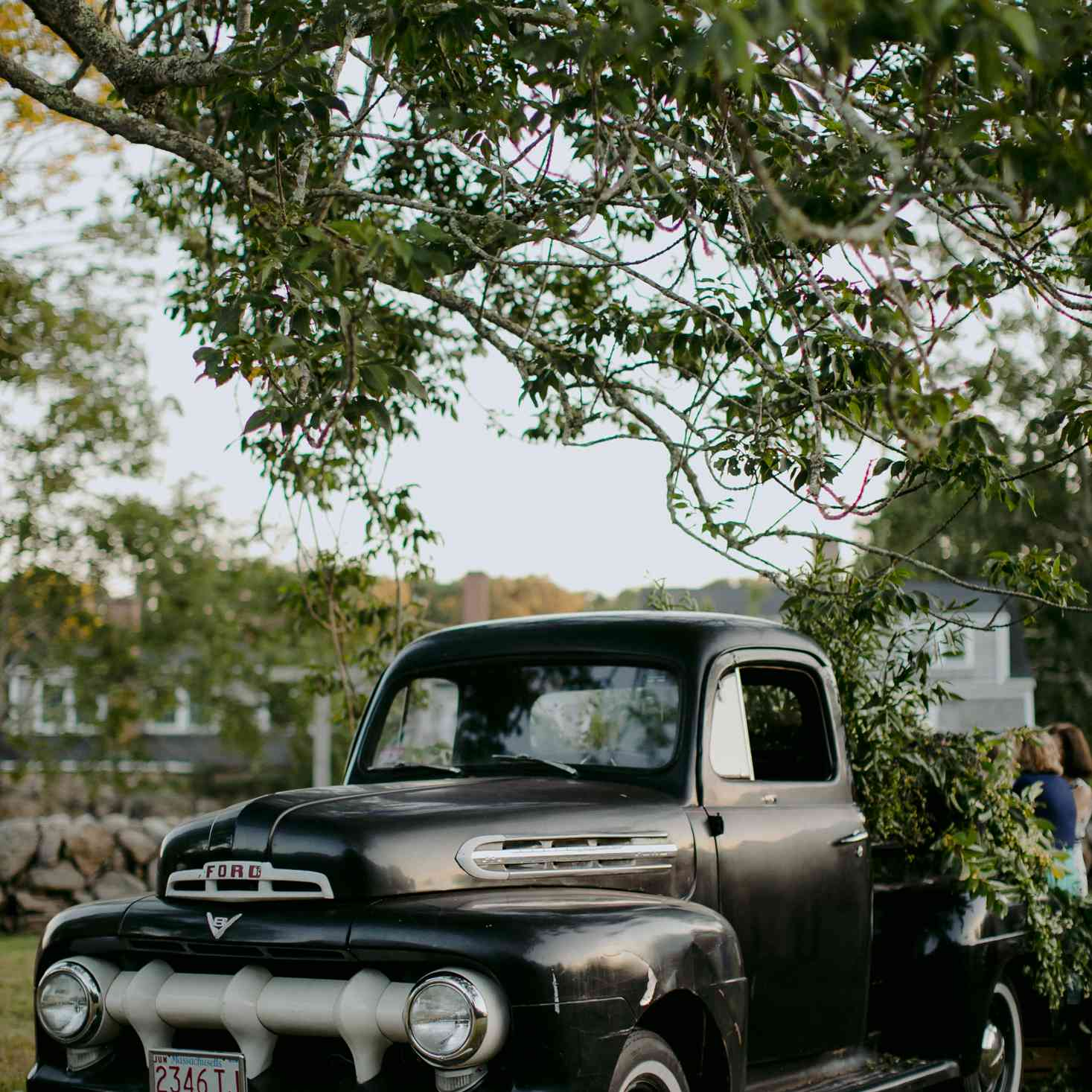 Vintage Ford truck with greenery filled bed