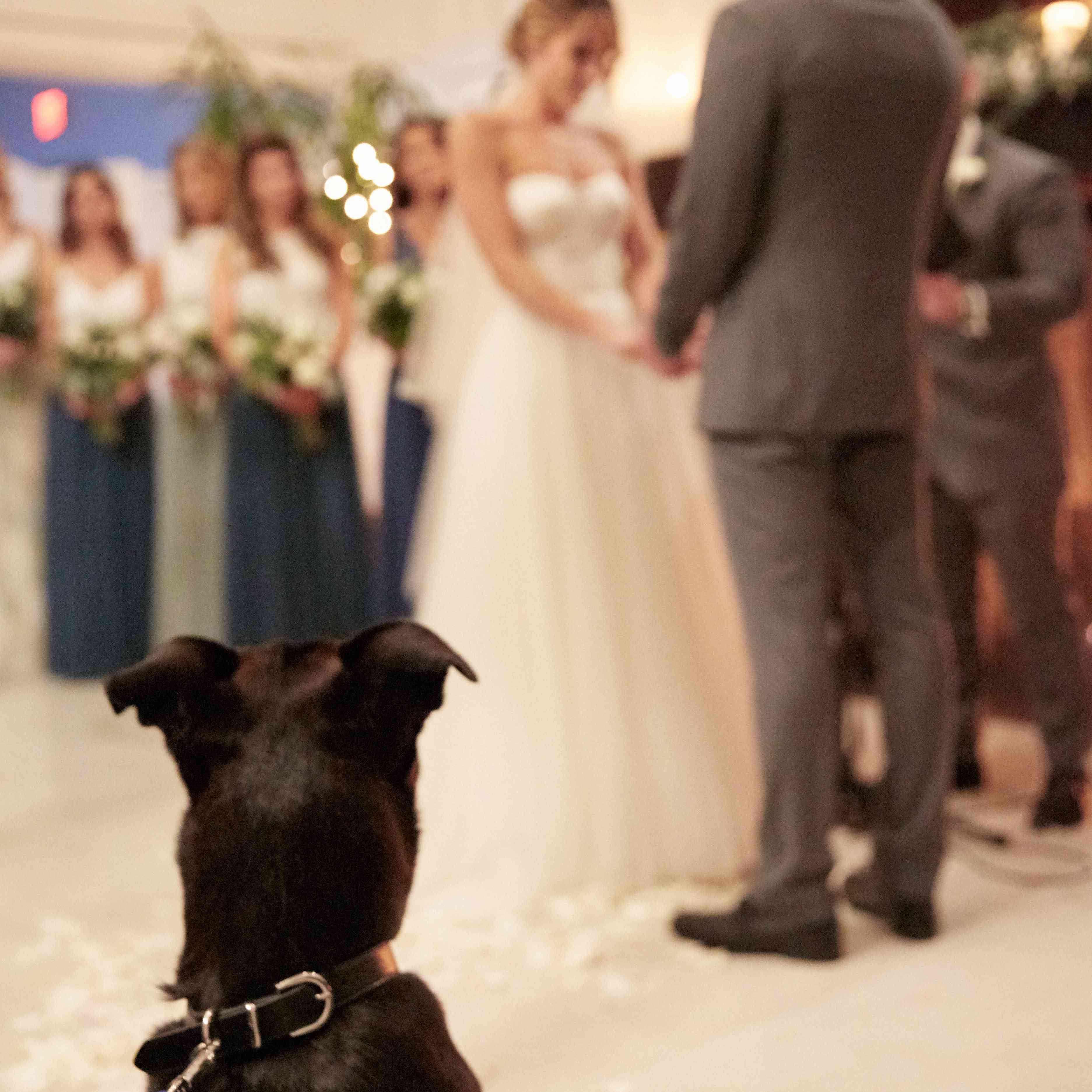<p>Dog Watching Ceremony</p><br><br>