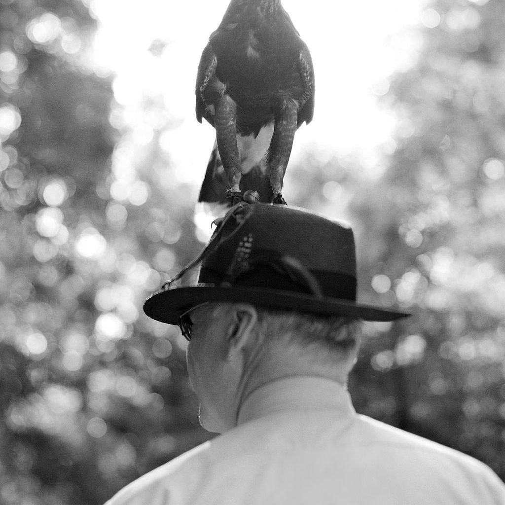 bird on man's head