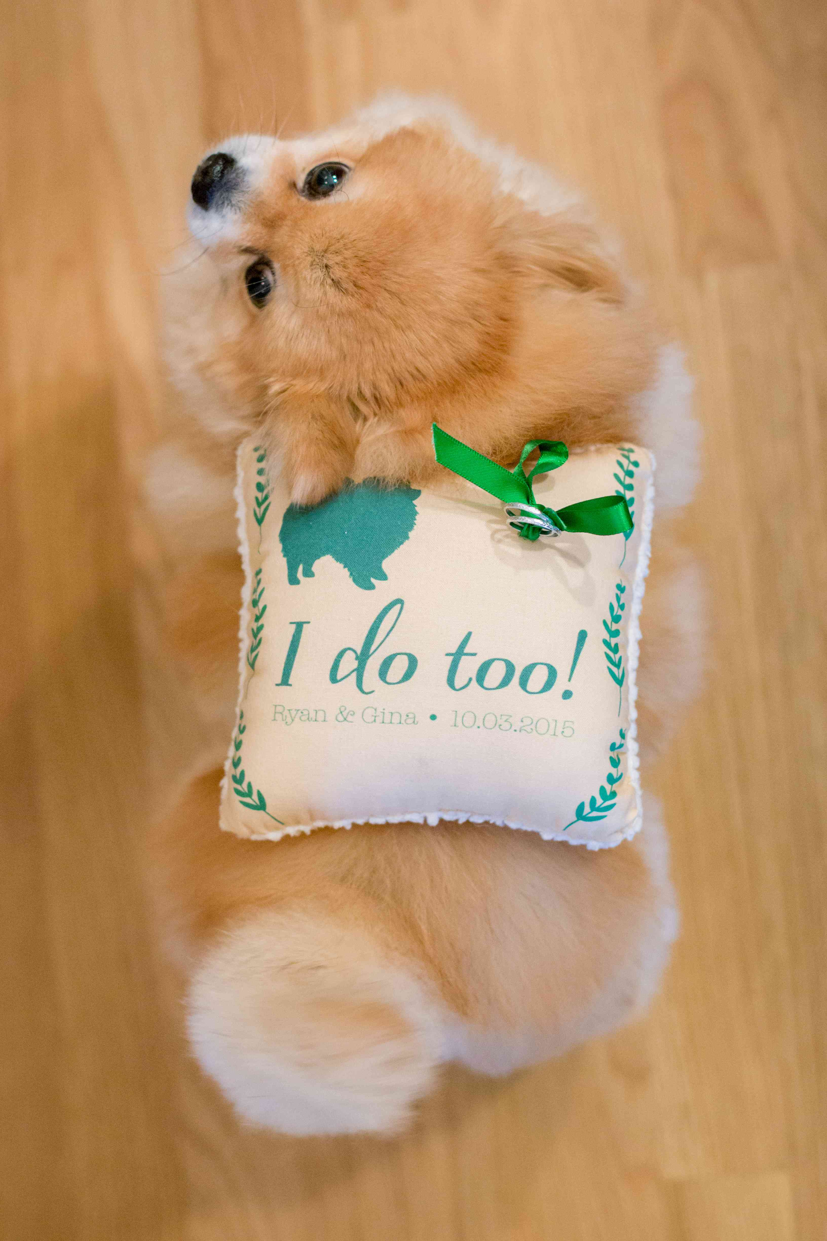 Dog with ring bearer pillow