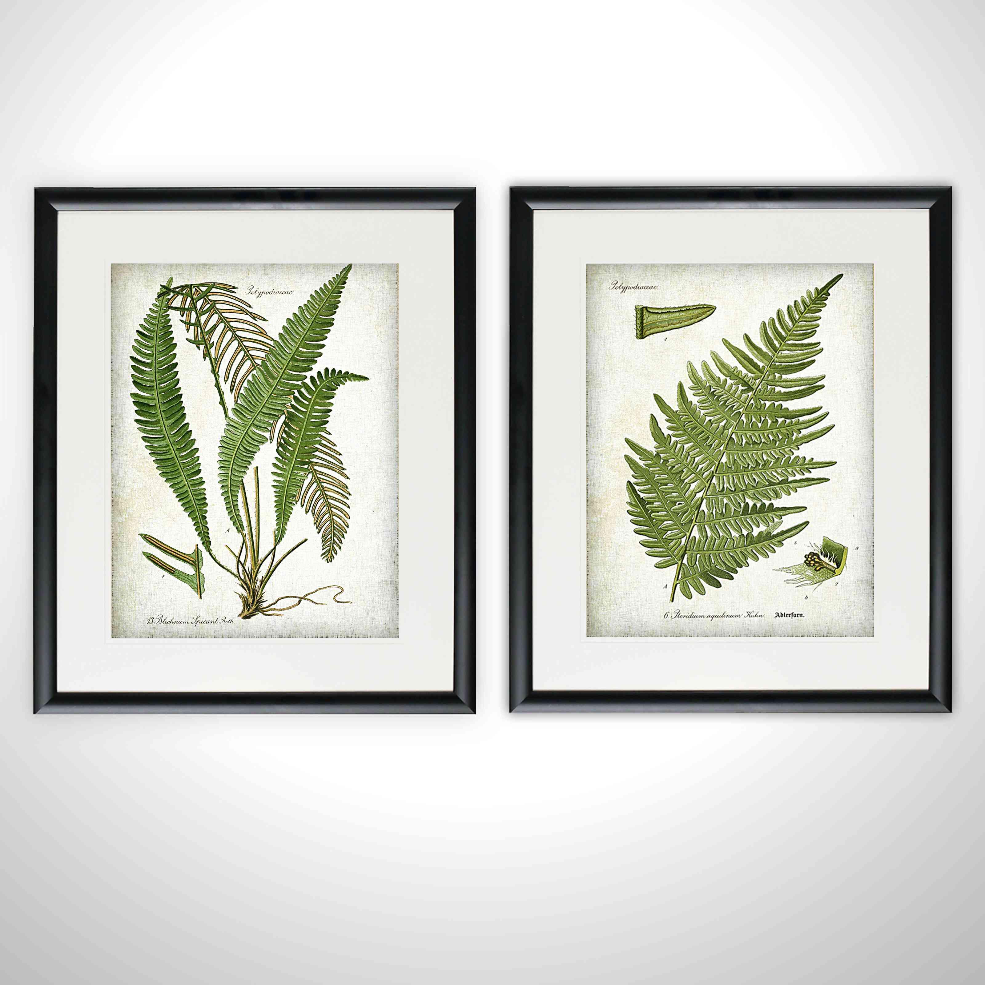 2-Piece Vintage Botanical Sketch