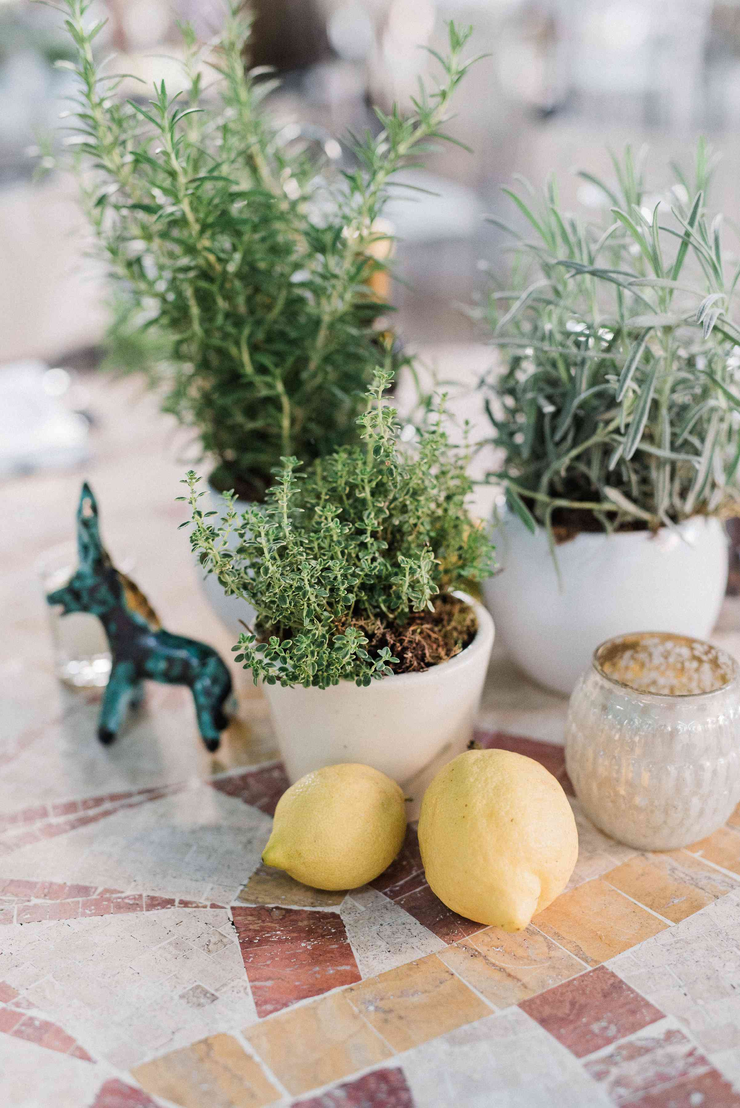 Plant arrangments