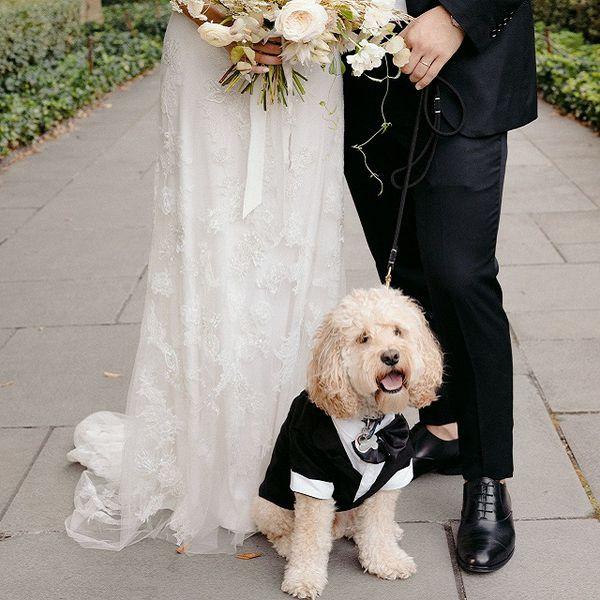 Dog in tuxedo at wedding