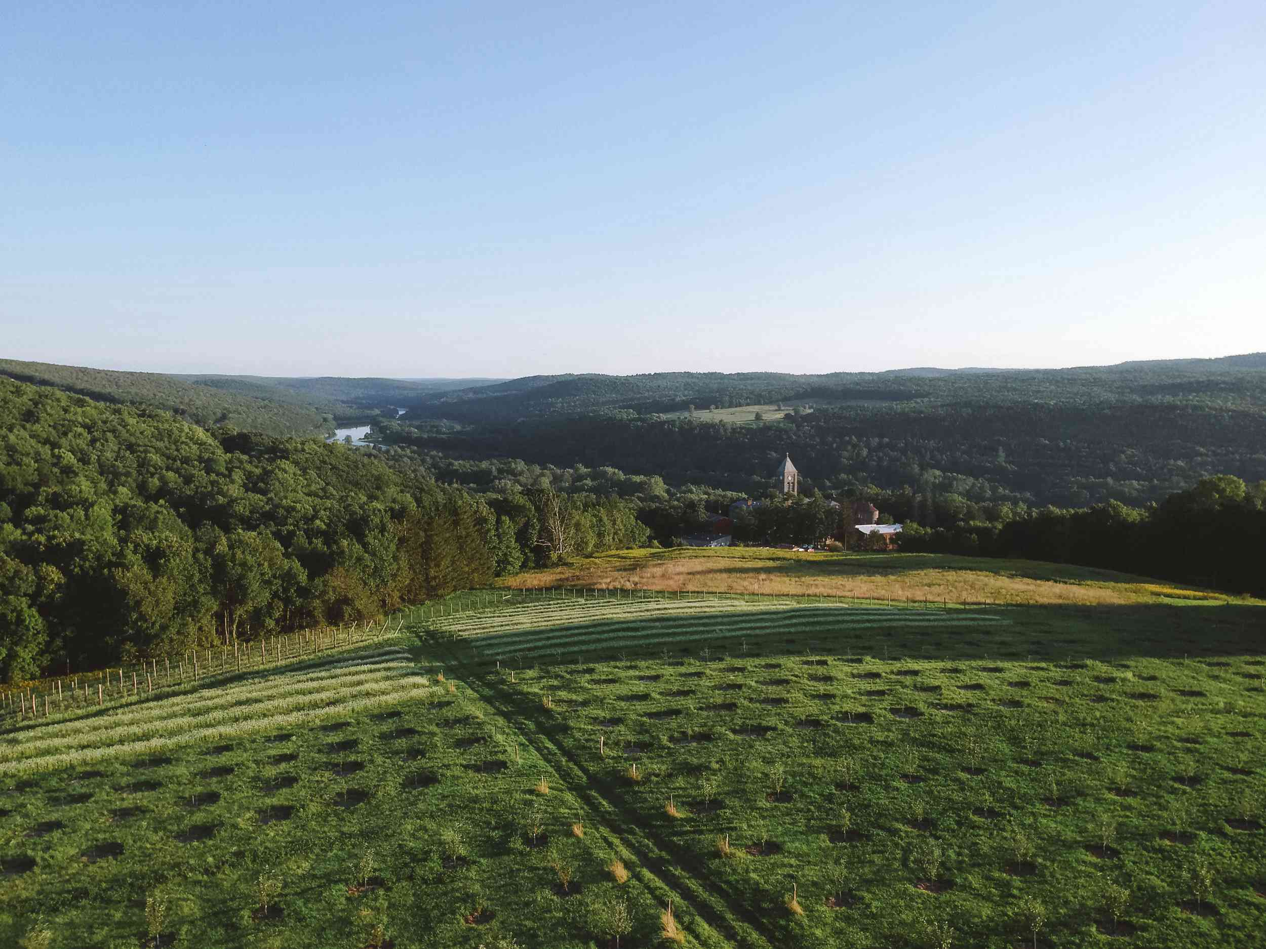 Drone shot of the orchard at Seminary Hill