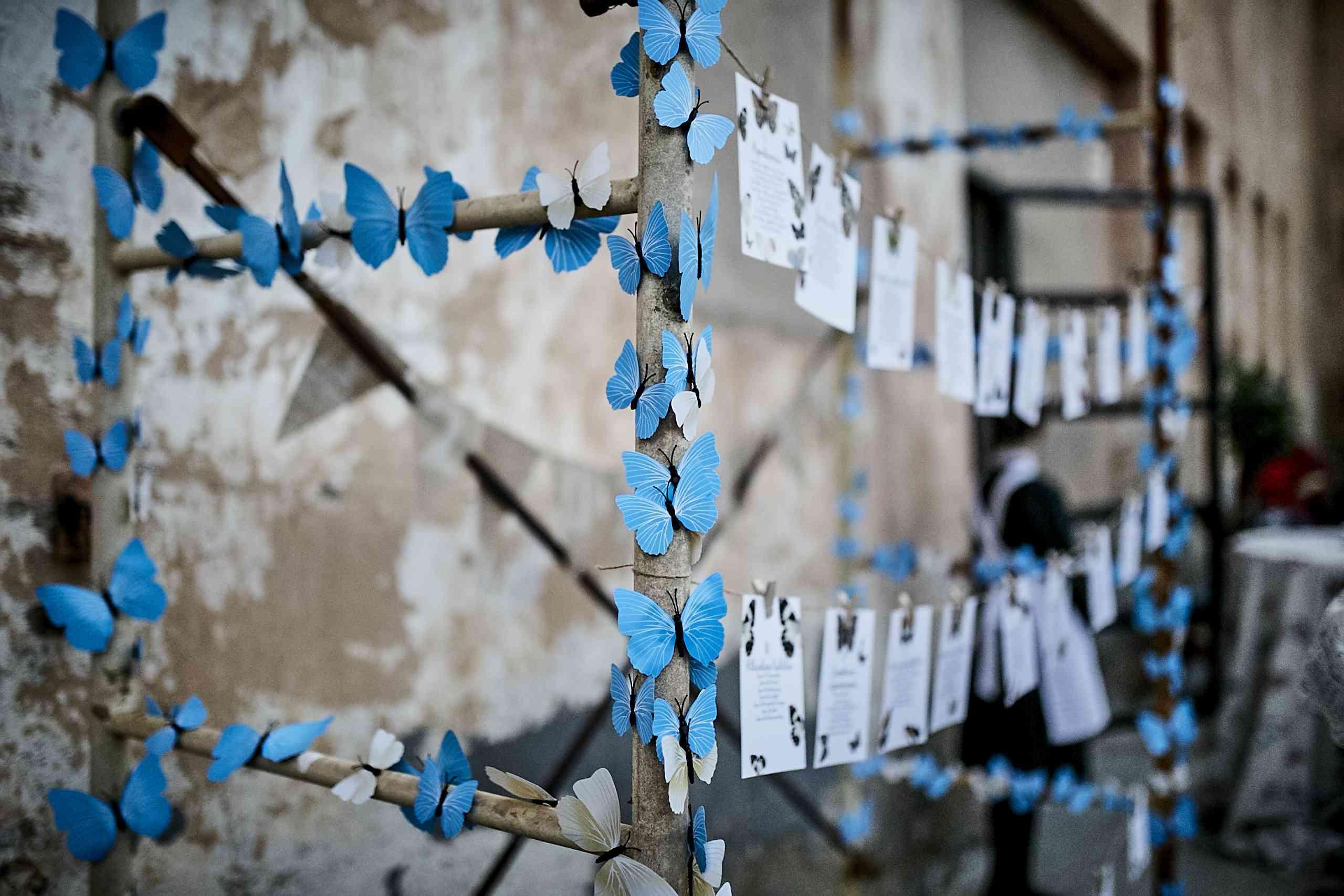 <p>butterflies</p><br><br>