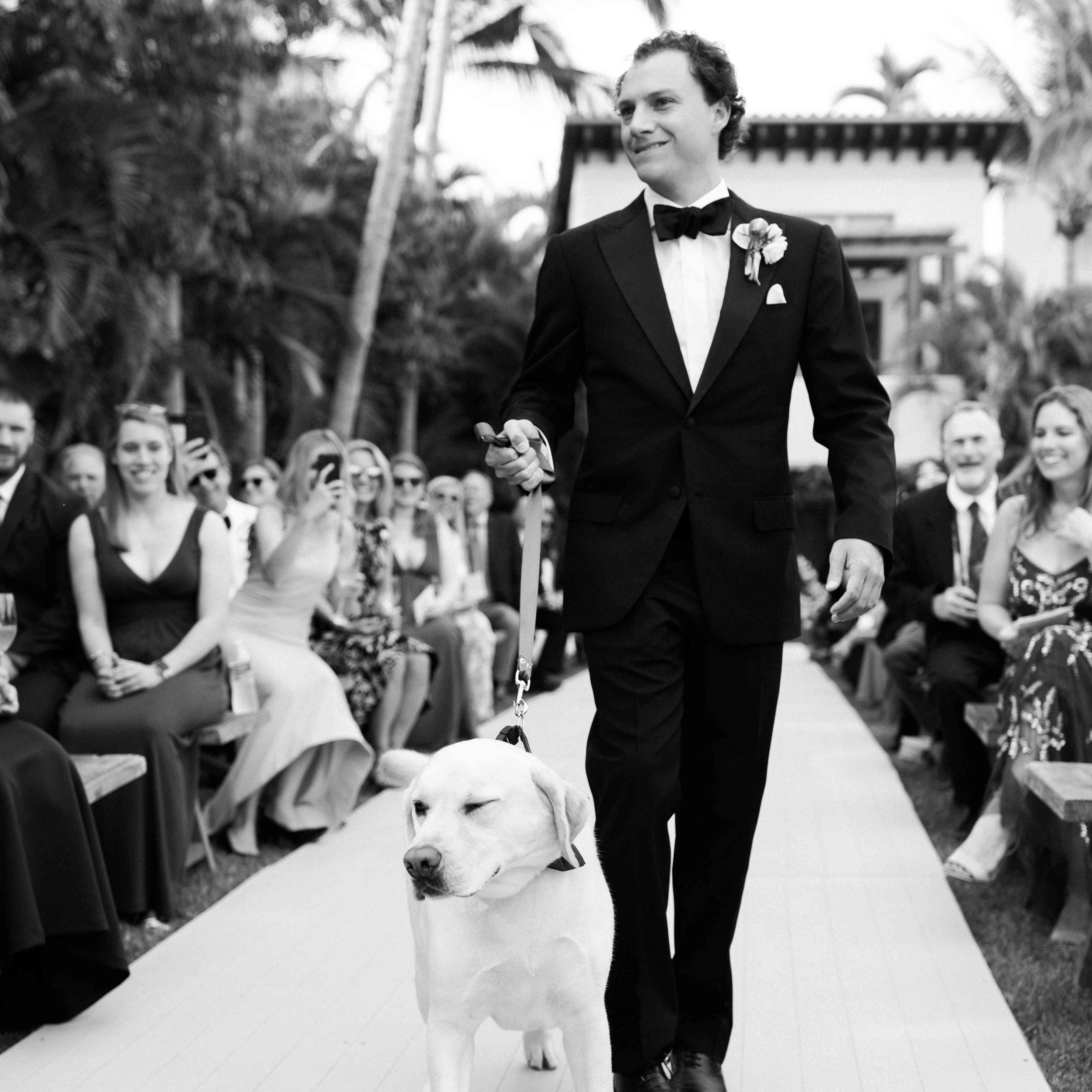 Henry the dog walks up the aisle