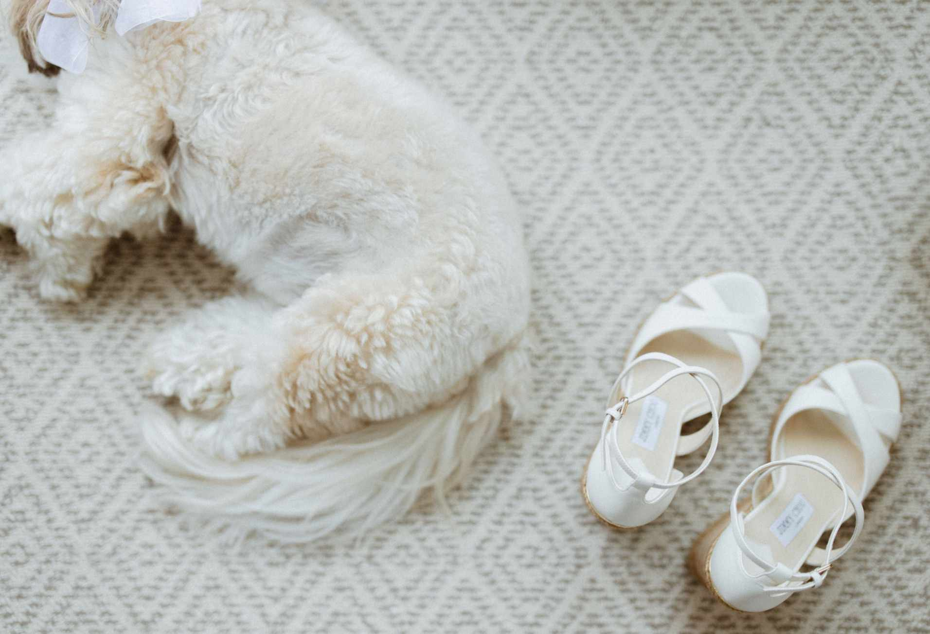 Dog laying next to bride's shoes