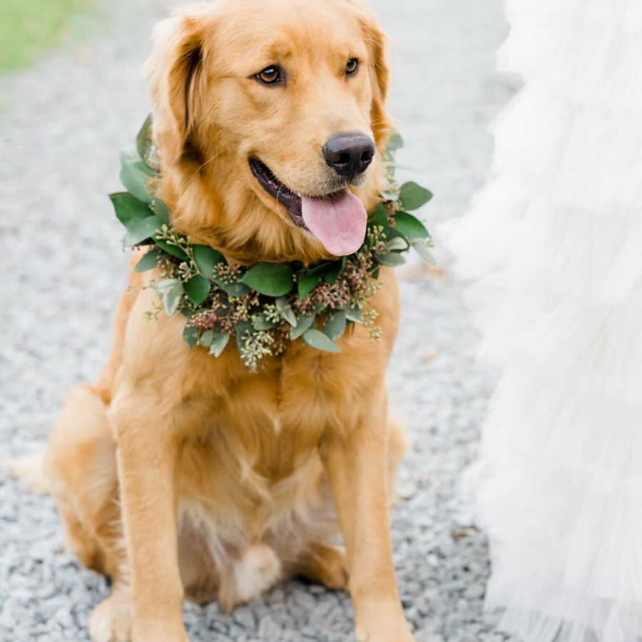 12 Ways To Dress Up Your Dog For Your Wedding