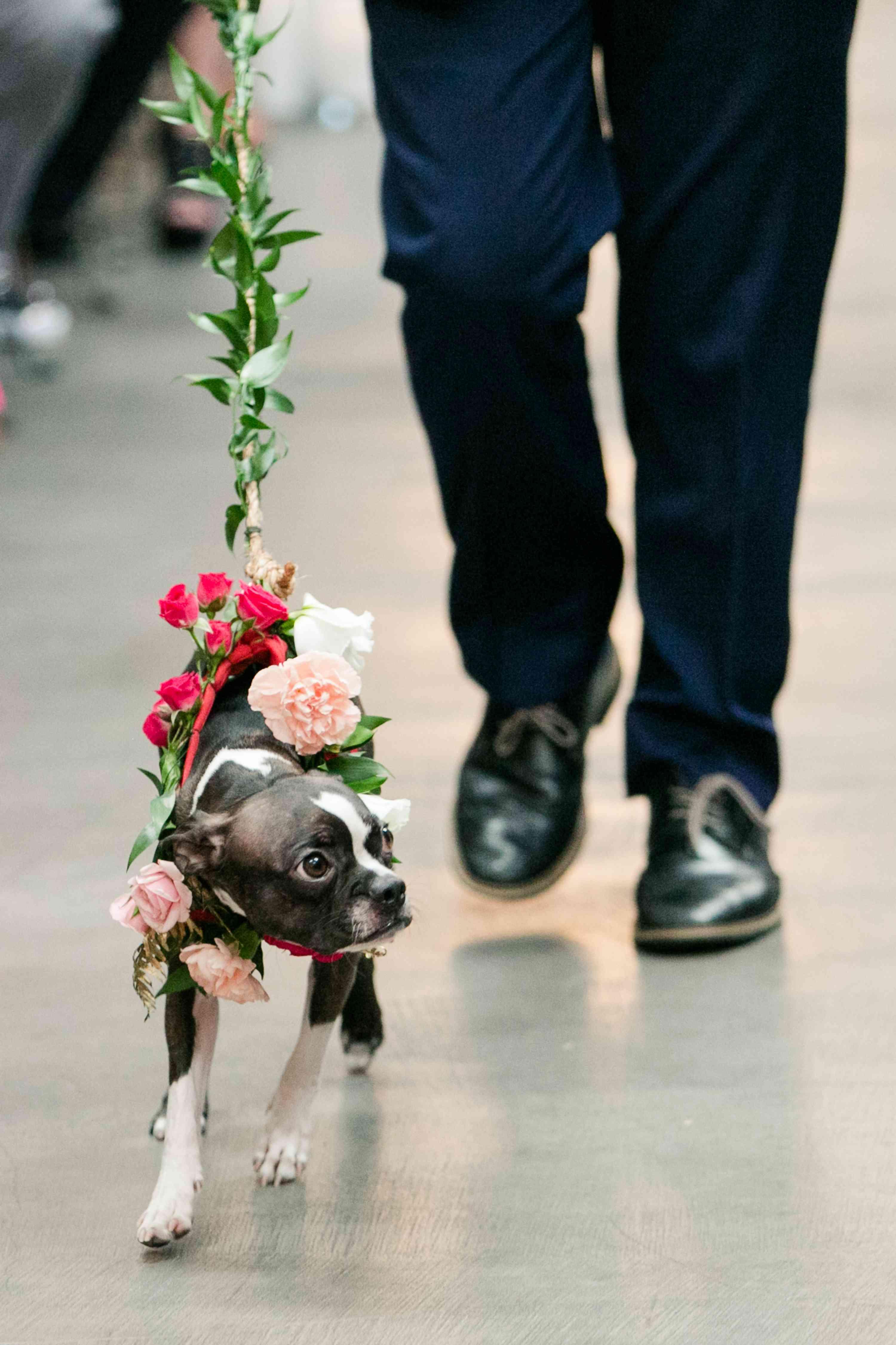 Dog on floral leash