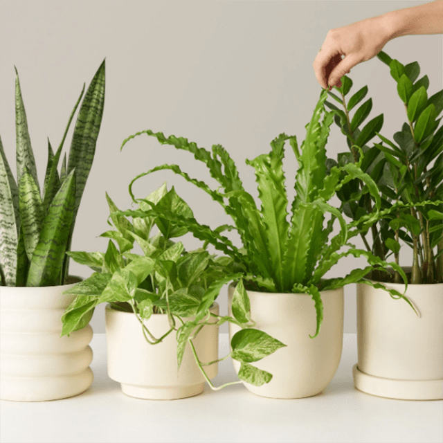 Medium Plants for Beginners Monthly Subscription