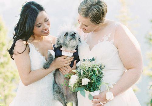 Brides with puppy in navy tux