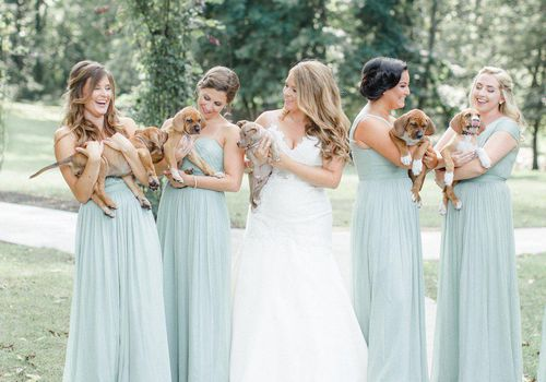 <p>Bridesmaids Holding Puppies</p>