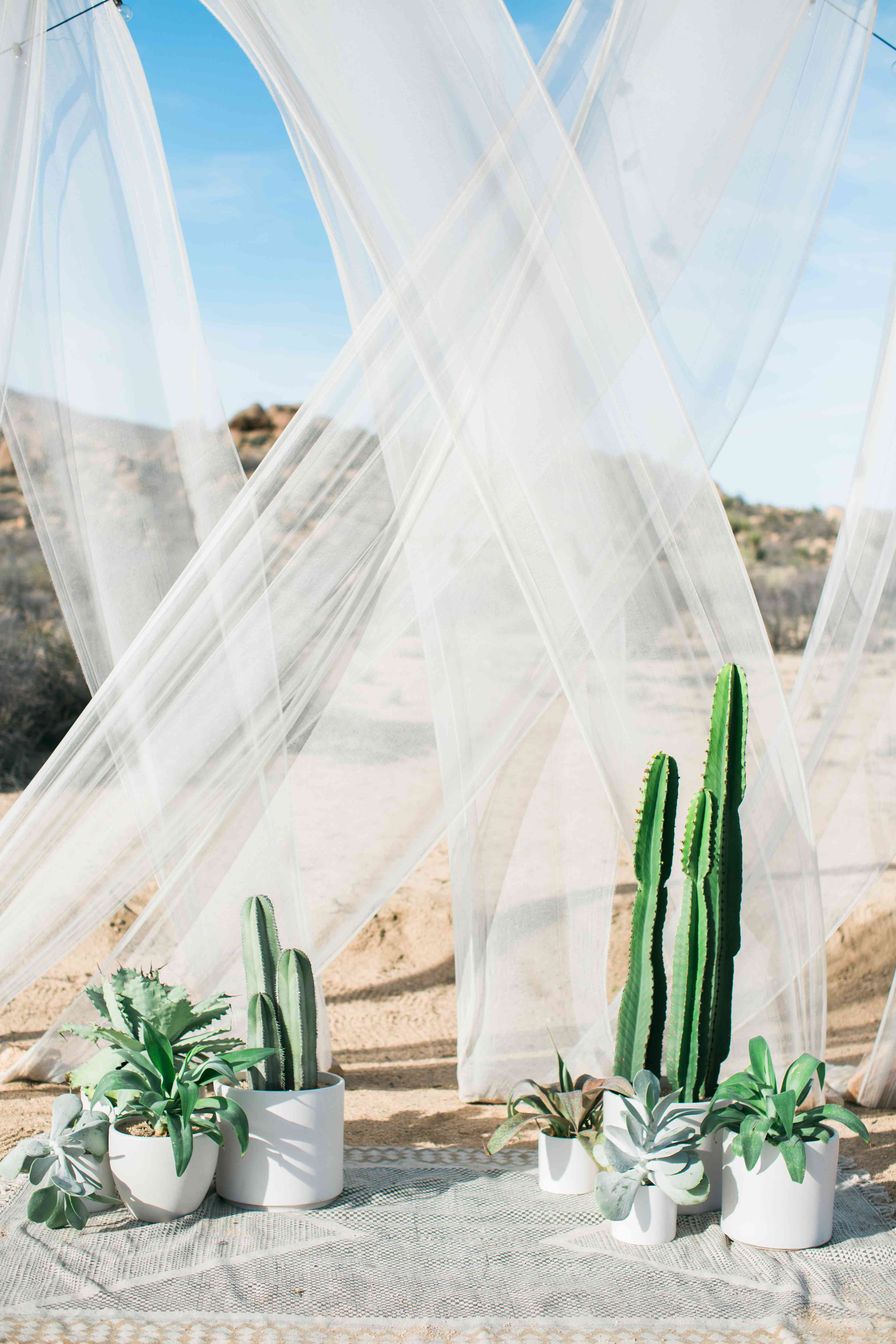 Cacti and Succulent Wedding Backdrop