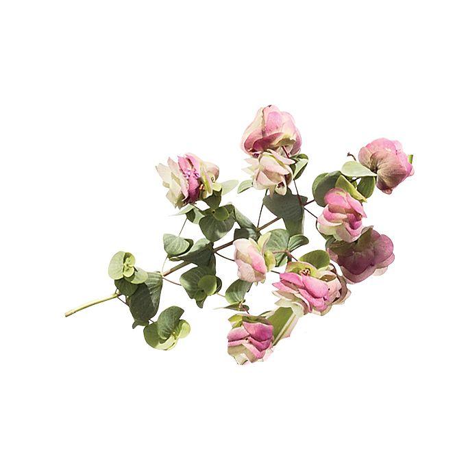 Blossoming Oregano stem