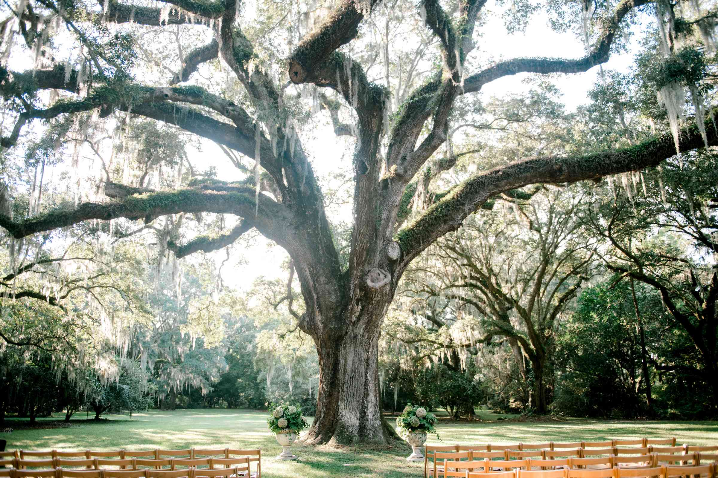 Ceremony space in front of tree
