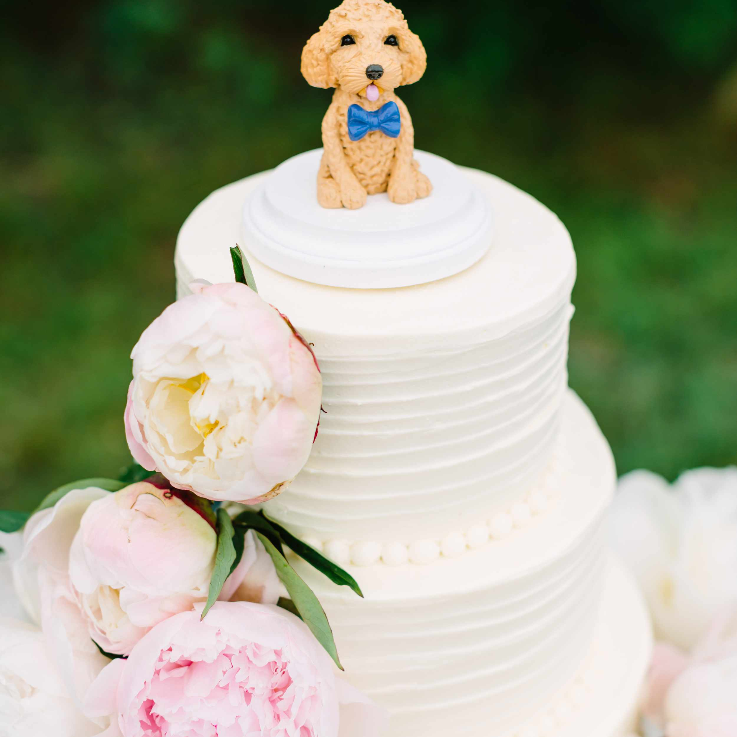 50 Too-Cute Ways to Include Your Pet in Your Wedding