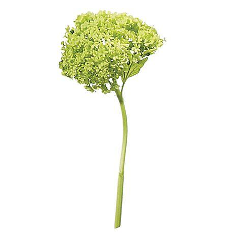 Green viburnum stem