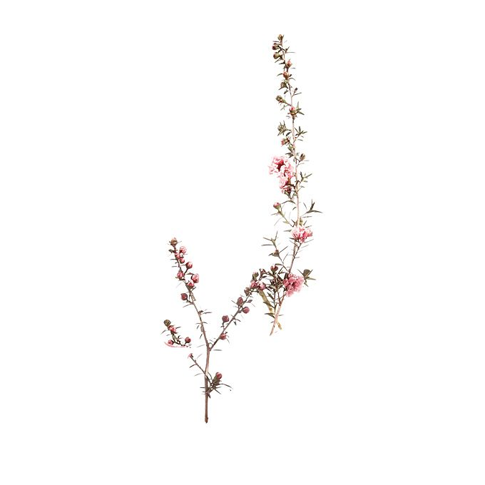 Pink lepto stems