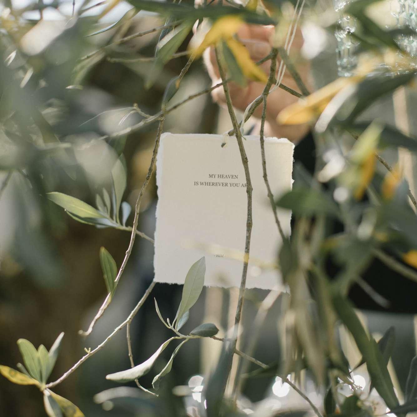 love letters in tree