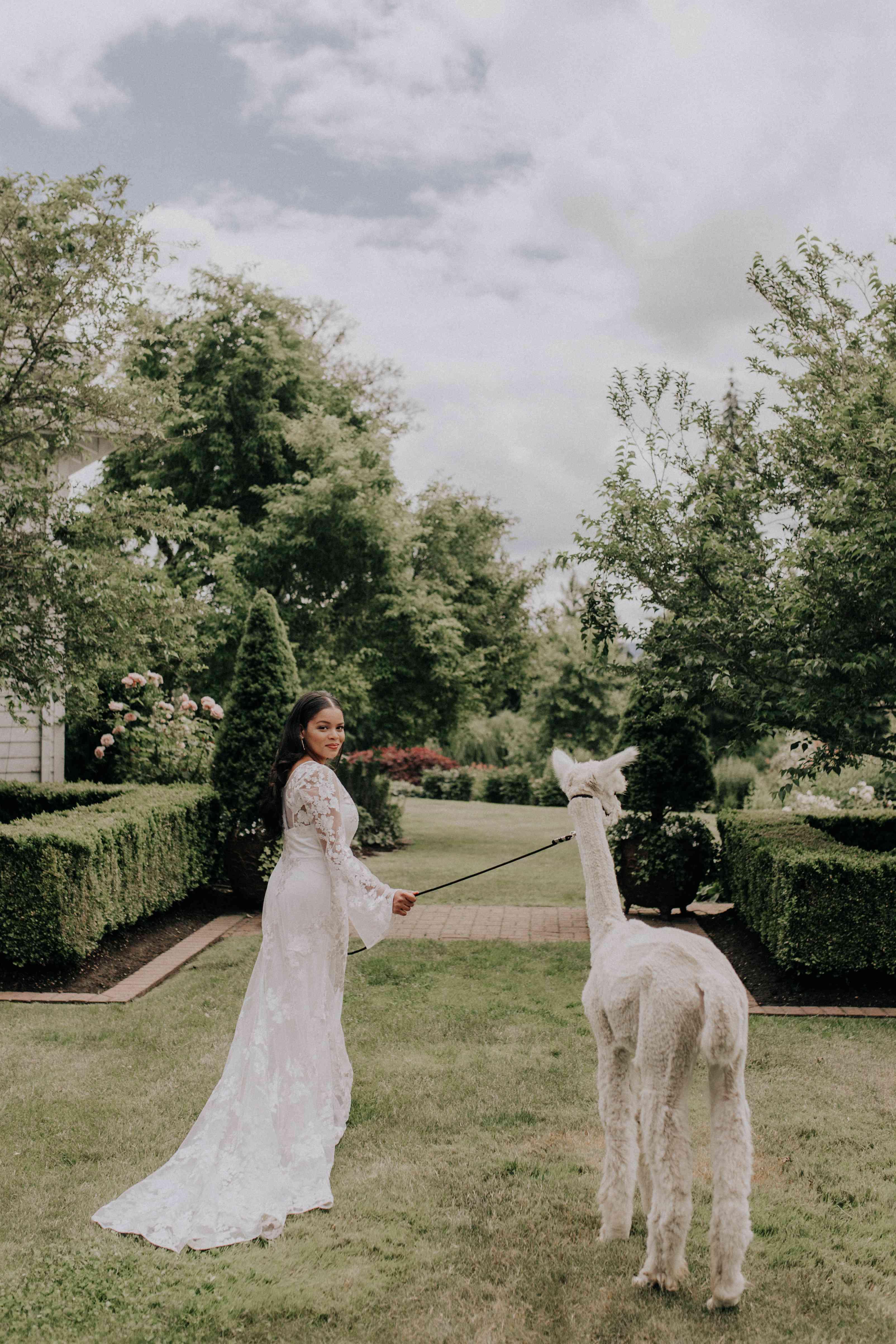 Bride with Alpaca