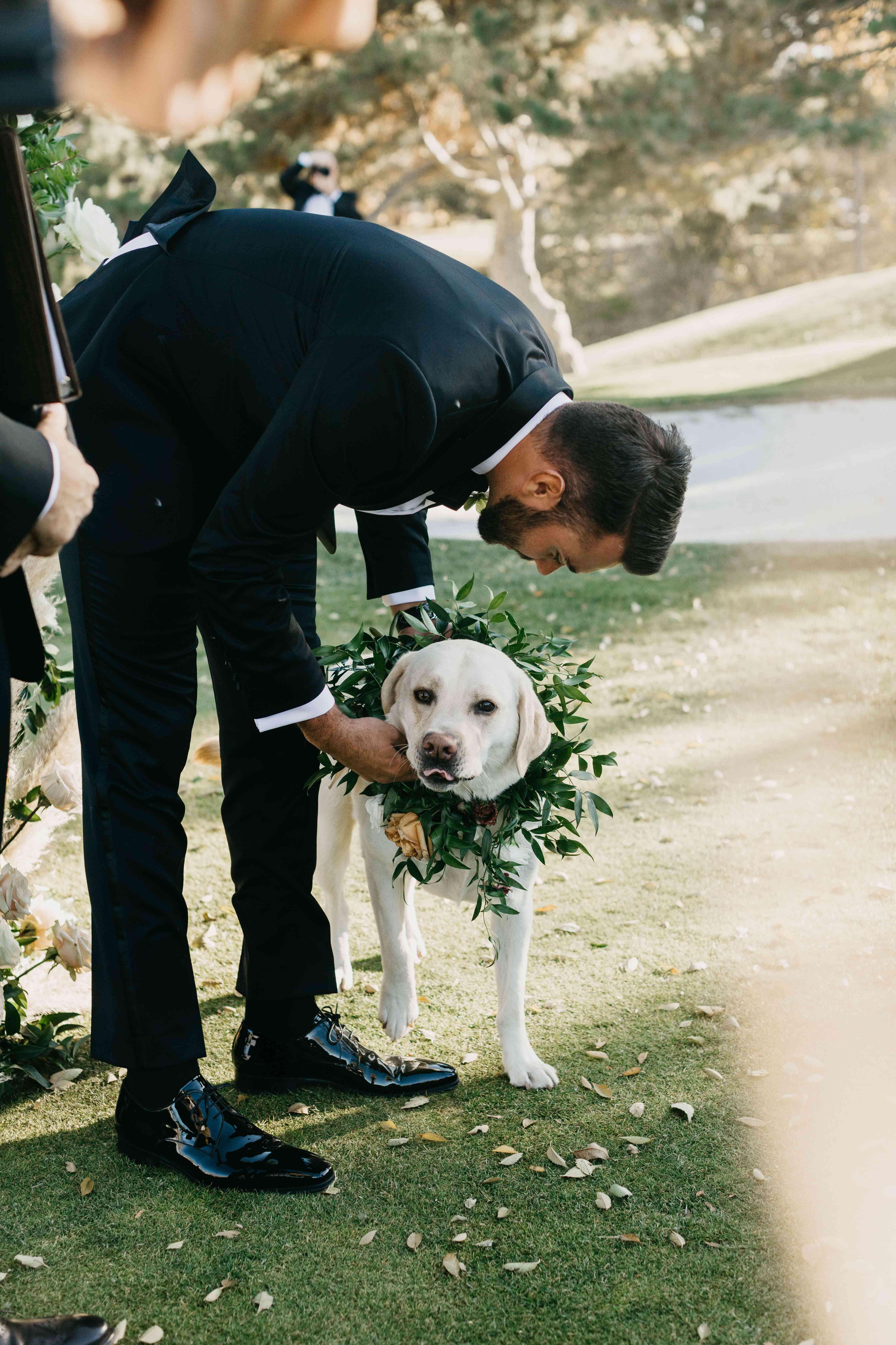 dog wearing greenery collar