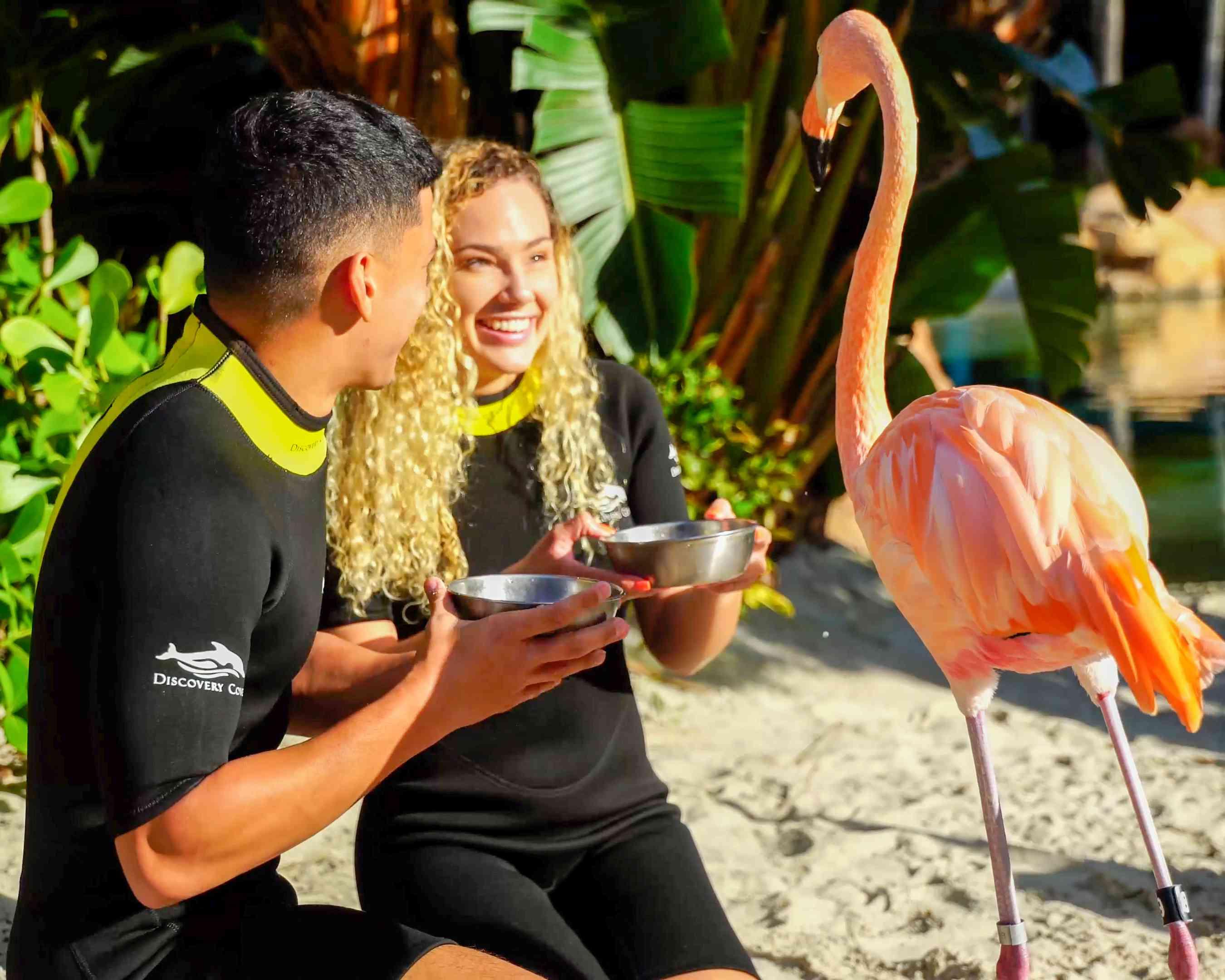 people feeding flamingoes