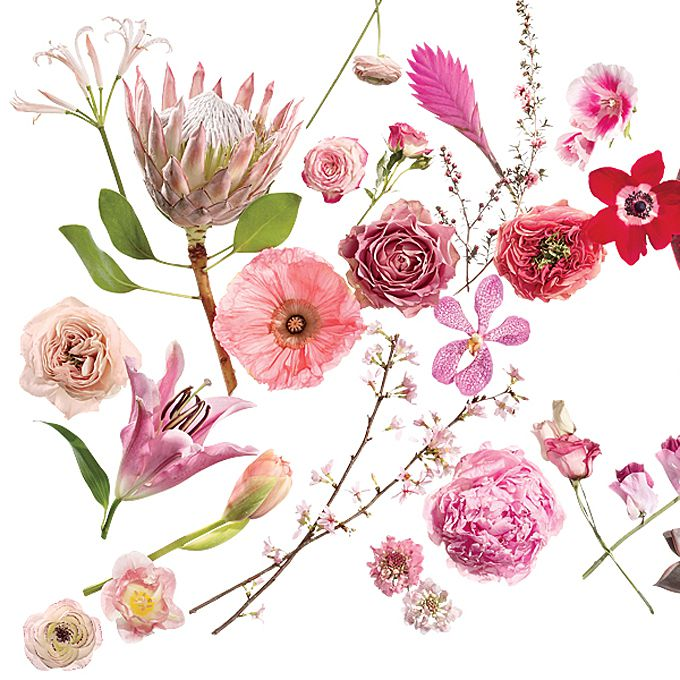 A Glossary Of Wedding Flowers By Color,How To Draw A Bedroom Step By Step Easy
