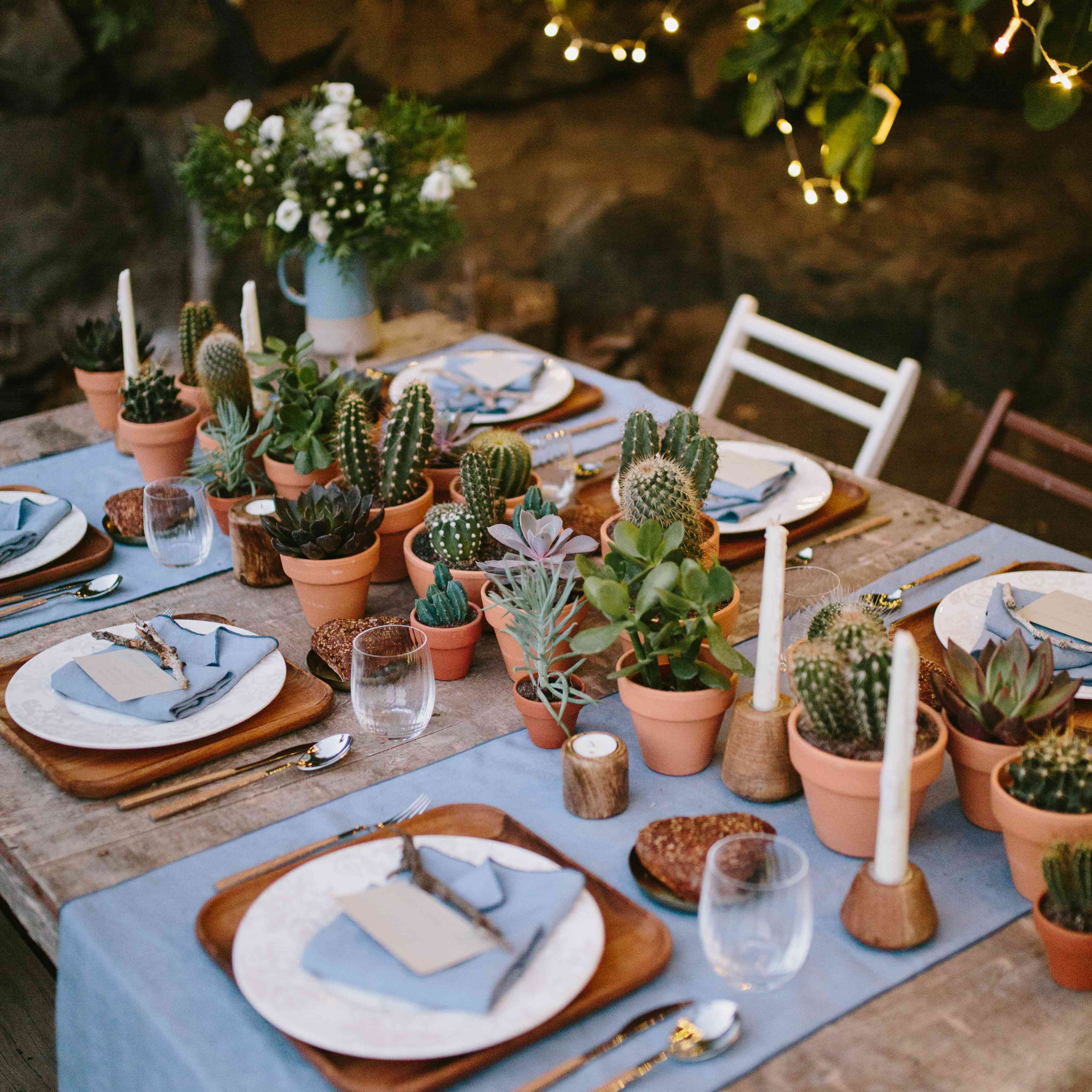 Potted Cactus Plants on Table
