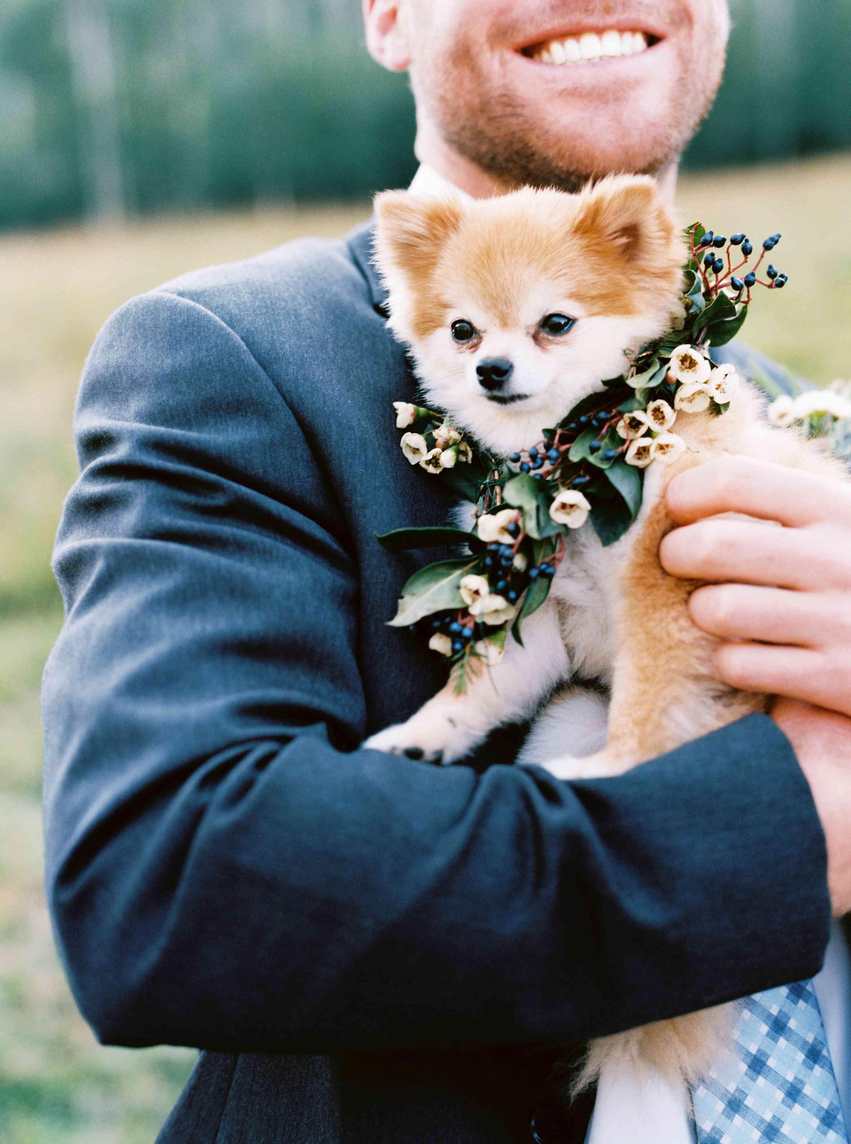 Puppy with Flower Collar