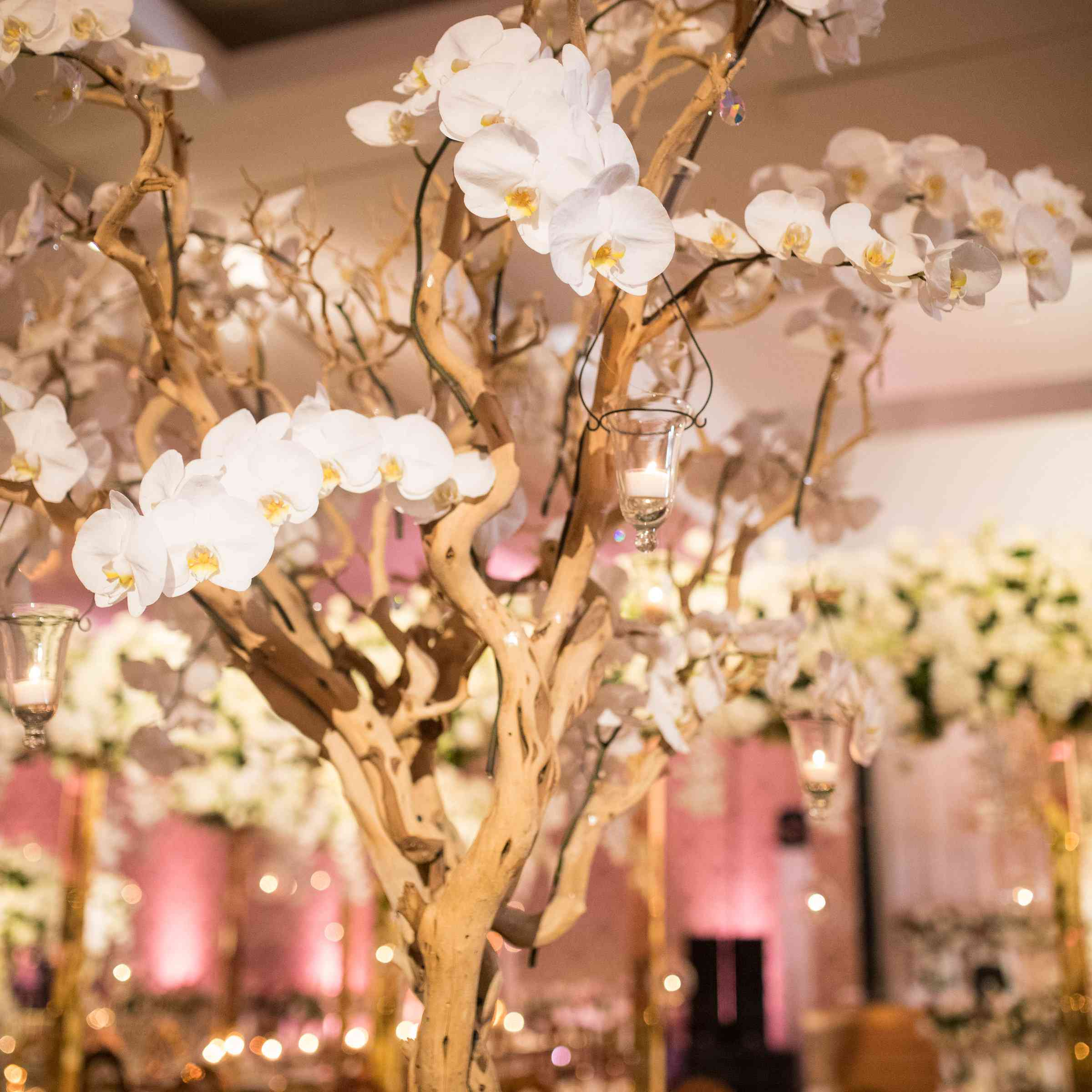 orchid tree center piece