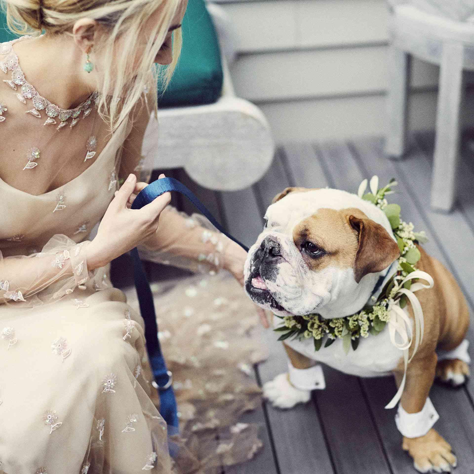 English Bulldog Ring Bearer