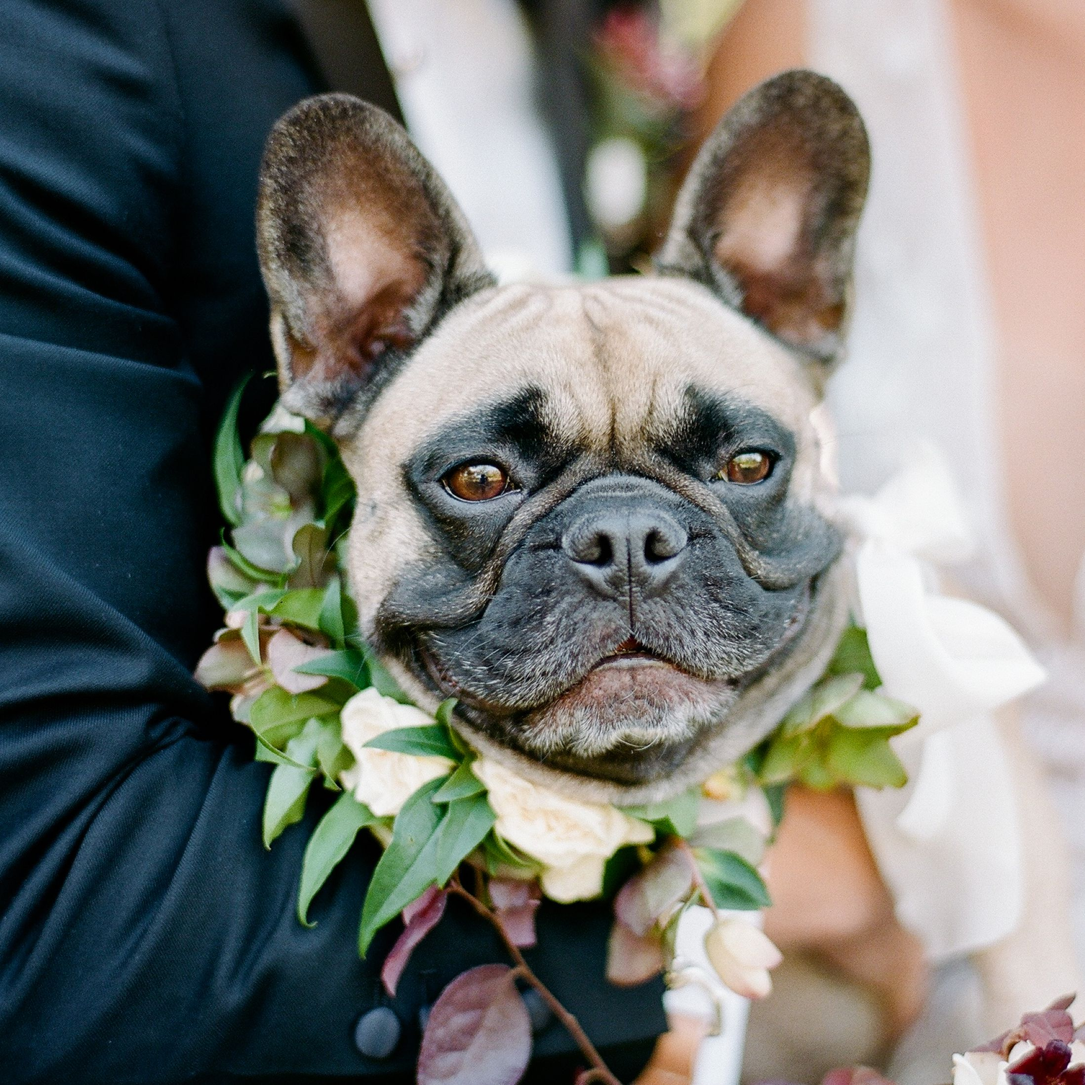 50 Too Cute Ways To Include Your Pet In Your Wedding