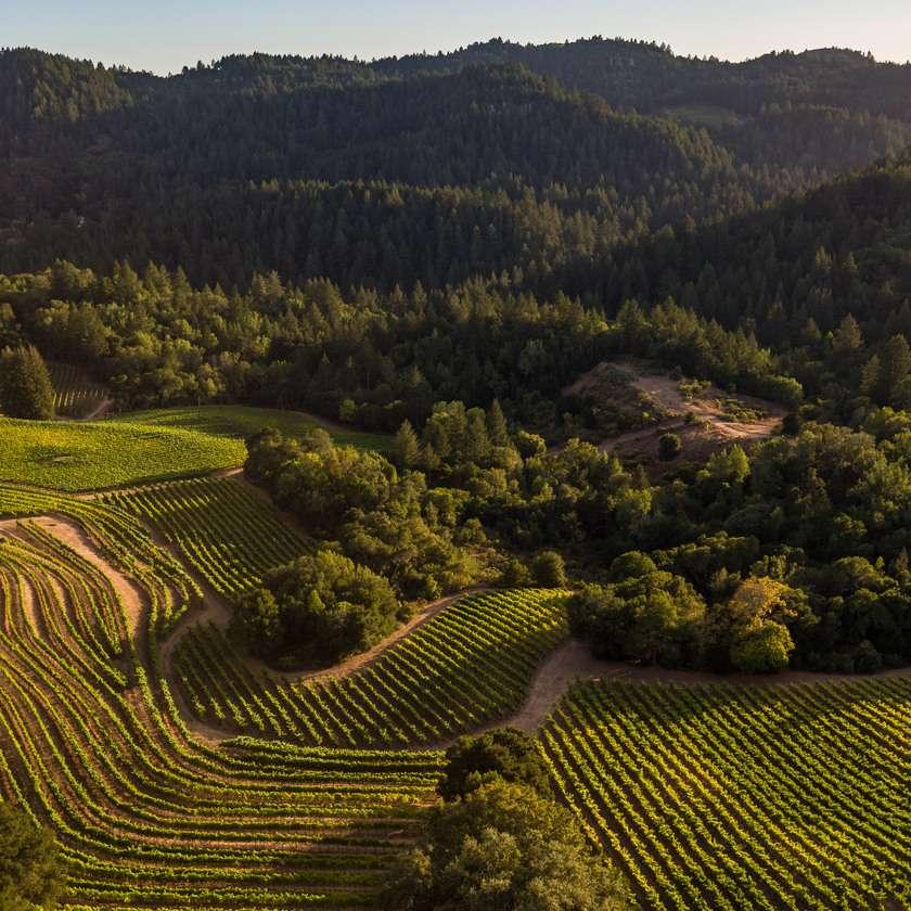 Mt. Vedeer vineyard