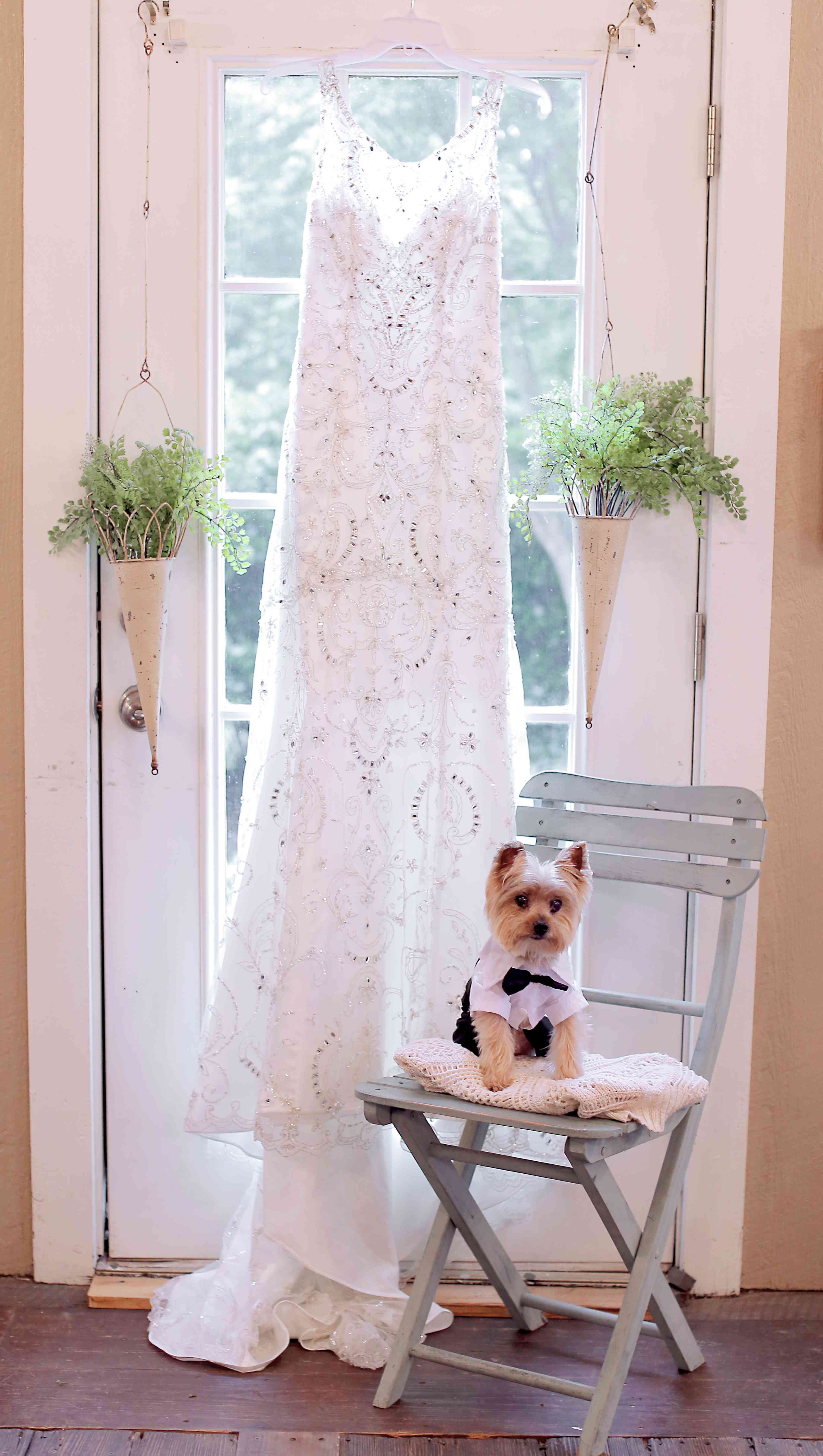 Dog posing with dress