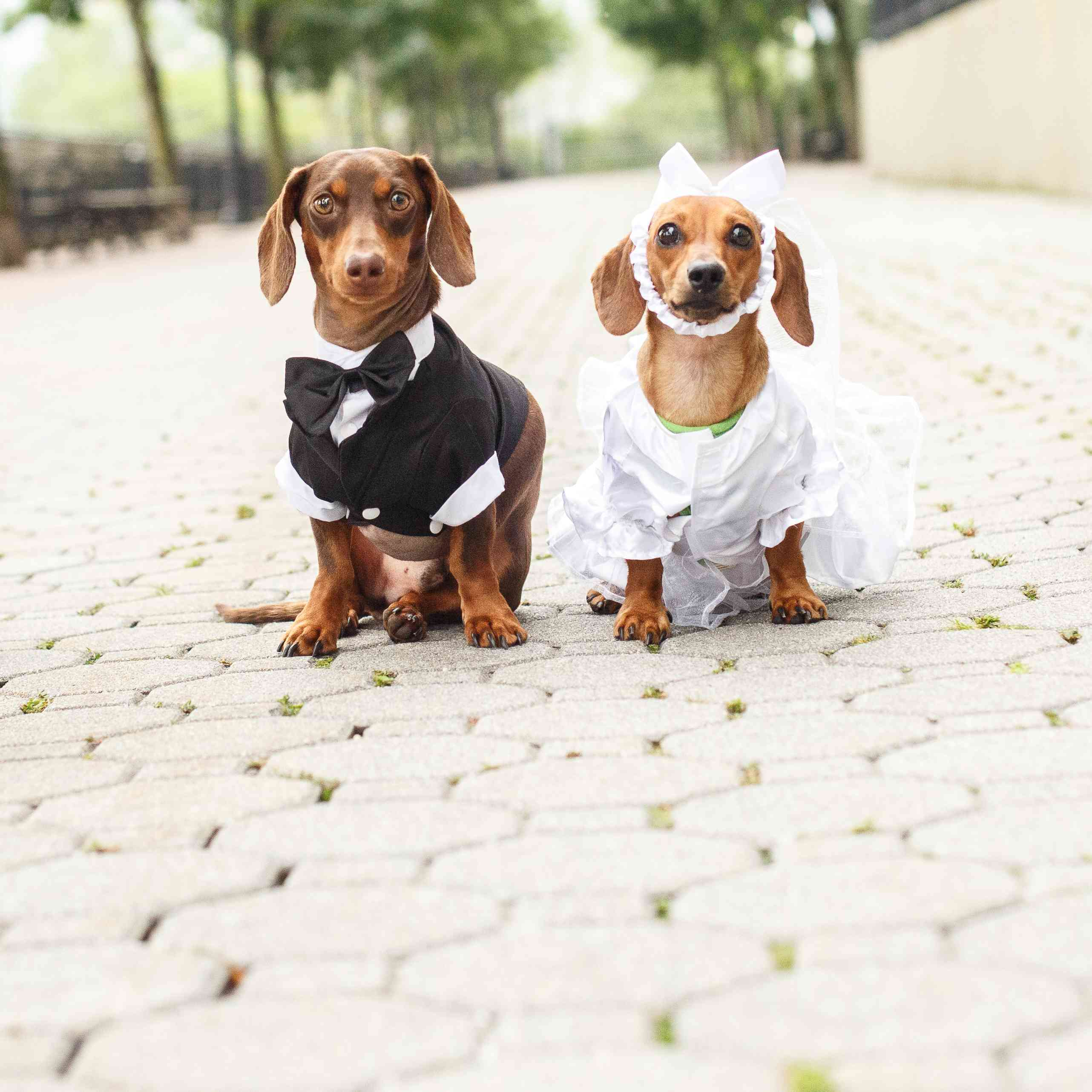 8 Dog Weddings to Give You All the Warm Fuzzies
